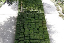 buxus and landscape