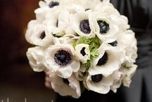 Flowers / by Elizabeth Graf