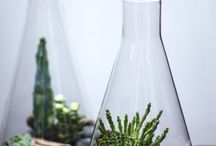 Conical Flask Terrarium Ideas / A beautiful collection of wonderful ideas for using chemistry inspired glassware for plants and terrariums.   See our full range here https://www.theconsumablescompany.com/product-category/glass-products/