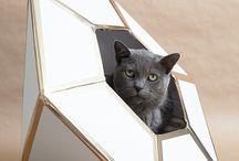 Accessoirer for katt