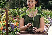 Gardening  / by HSLDA Canada