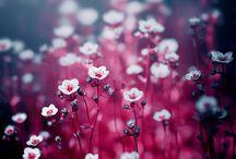 blomst og div