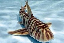 Sharks / Don't let Jaws taint your perception. Most sharks are not scary at all.  Sharks and rays are the same family