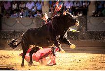 Temporada El Juli 2014 / Las mejores fotografias de la temporada 2014 por el maestro El Juli