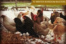 ☆ Chicken