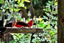 Trips & Nature / Em contato com a natureza para manter o equilíbrio***