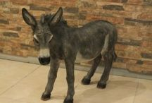 Donkey Sculpture