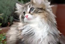 Cats and Kittens / Cats and Kittens