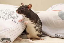Ritty Ratties