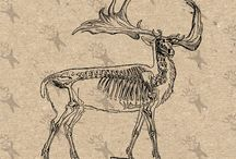 Vintage clipart - Deer