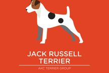 Jack Russel Love / by Mare