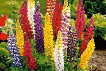 flores para cabaña