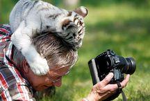 фото и животные