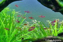 Aquaria mia / Aquatic Plants