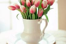 Tulips / by Rachel Parris