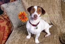 My heart belongs to doggy... / by Sherri Velliquette