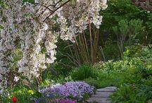 Pretty garden and ideas