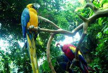 Amazonas / Cestováni,příroda,zdraví