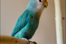 Ma Lovelybird
