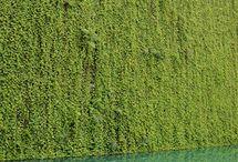 Vertical Gardens / Garden walls, creative greening of vertical space