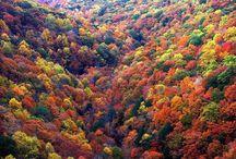 Vermont / by Joyce Sengewald