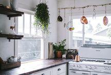 Plants/Indoor