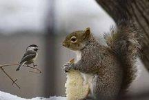 Трогательная дружба....