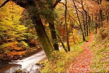 Autumn on Exmoor / Autumn on Exmoor... When most of the tourists have gone, Exmoor brings out its best colours. Rusty reds, mossy greens, dew drops and cobwebs take over the moor. Brightly coloured leaves reflect in the many rivers. It's the season of the rut.