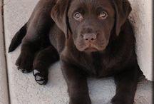 Dogs / by Hillary Basten