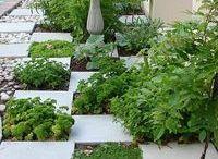 for my future garden / by Ashley Faircloth