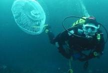 Scuba / Scuba diving Underwater photography