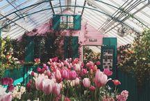 Greenhouse + Farm
