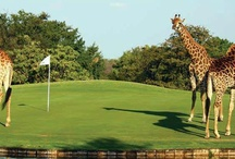 Animals on a golf Course