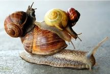 snails / by one purple snail