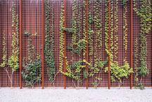Klimplanten | Inspiratie
