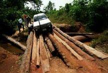 surogat lemnos -