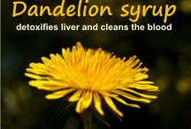 Dandelion honey detoxifies liver / Dandalions are extremely healthy for our entire body! But they excel in cleaning the blood and detoxifying the liver. And the roots heals leukemia! How about that!  http://journals.plos.org/plosone/article?id=10.1371/journal.pone.0030604