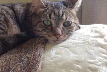 Kitties / teach you patience. and make you sleepy.