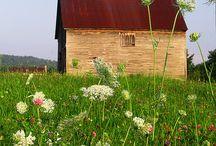 Wilde bloemen _ FIELDS - COTTAGES -