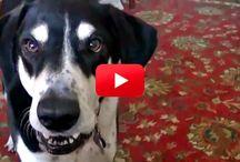 VIDEOS ANIMALS