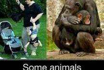 Human vs Animal