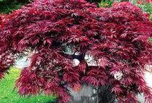 arbuste spécial