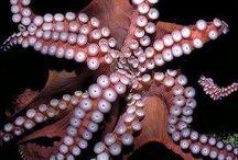 tentaclesssssssss