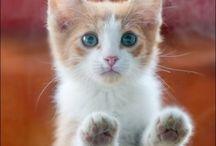 kitties / by Ariana Burton Seimas