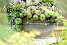 Garden and Outdoors