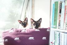 Stockwin's Cats / Some of the cats who have enriched our lives