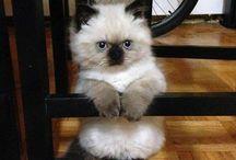 So....Cute!! ^^