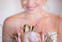 Proteas / Protea flower