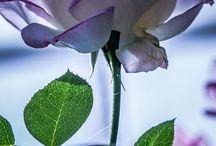 fleurs en papier filtre