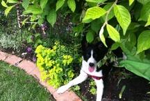 Gardening & Pets